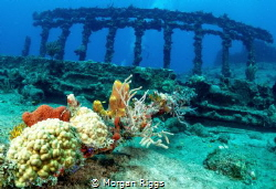 The exquisite columns left by the RMS Rhone by Morgan Riggs